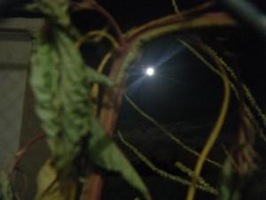 Luna-19-Nov-2013